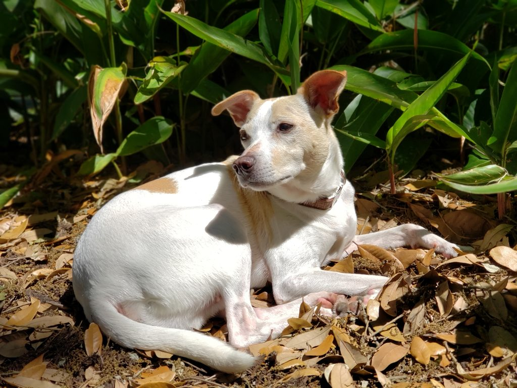 dogsitting_Florida